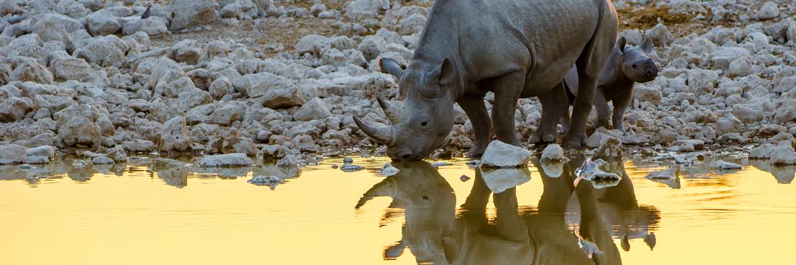 Rhino and cub